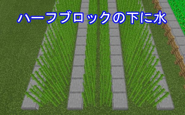 マイクラ サトウキビ畑サンプル