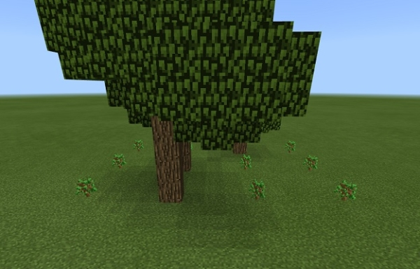 マイクラ 植林成長過程
