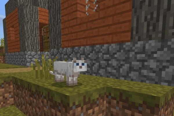 マイクラ 村のネコ