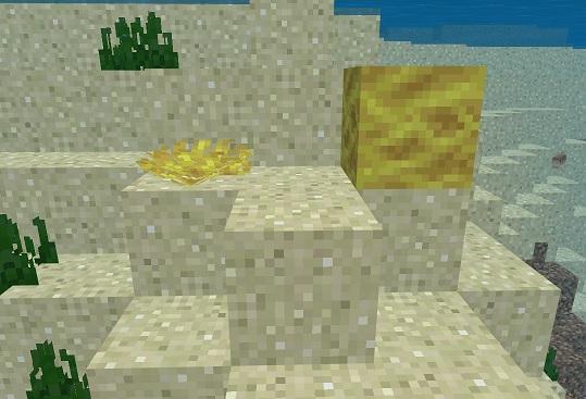 マイクラ サンゴとサンゴブロック