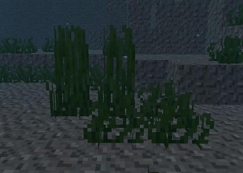 マイクラ 海草